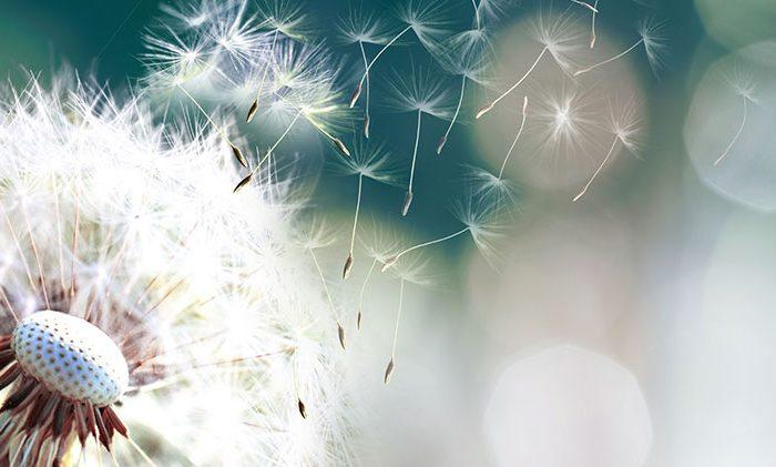 alergia covid lasalud